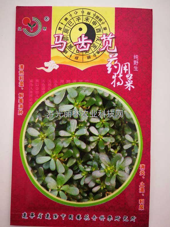 野生保健菜种子-马齿苋种子