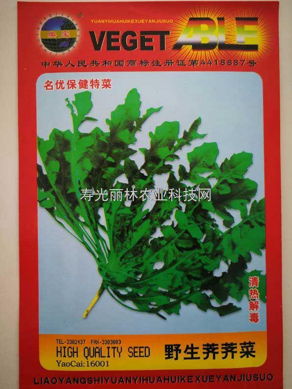 野生保健特菜种子-野生荠荠菜种子