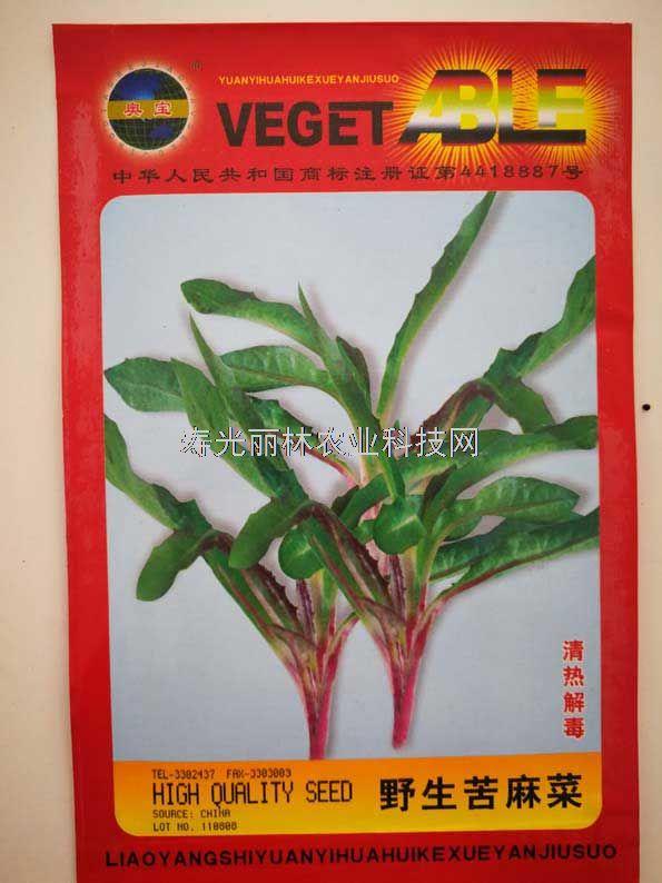 野生苦麻菜种子