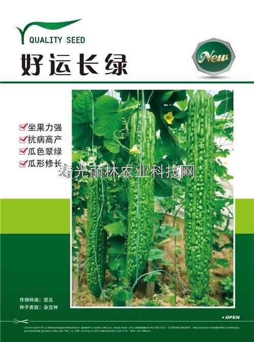 进口苦瓜种子-高产苦瓜种子好品种-好运长绿