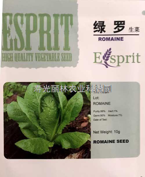 绿色直立生菜种子-绿罗生菜种子