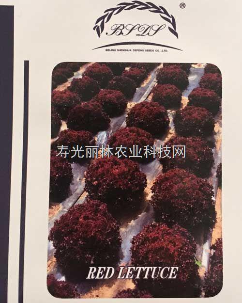 进口紫生菜种子-紫冠生菜种子-意大利紫叶生菜品种