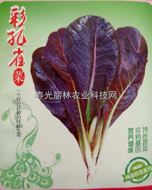 彩孔雀生菜种子-孔雀菜种子